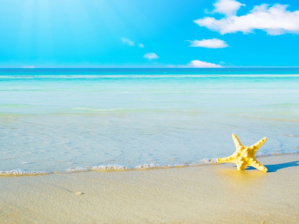 star fish sea beach sand wallpaper