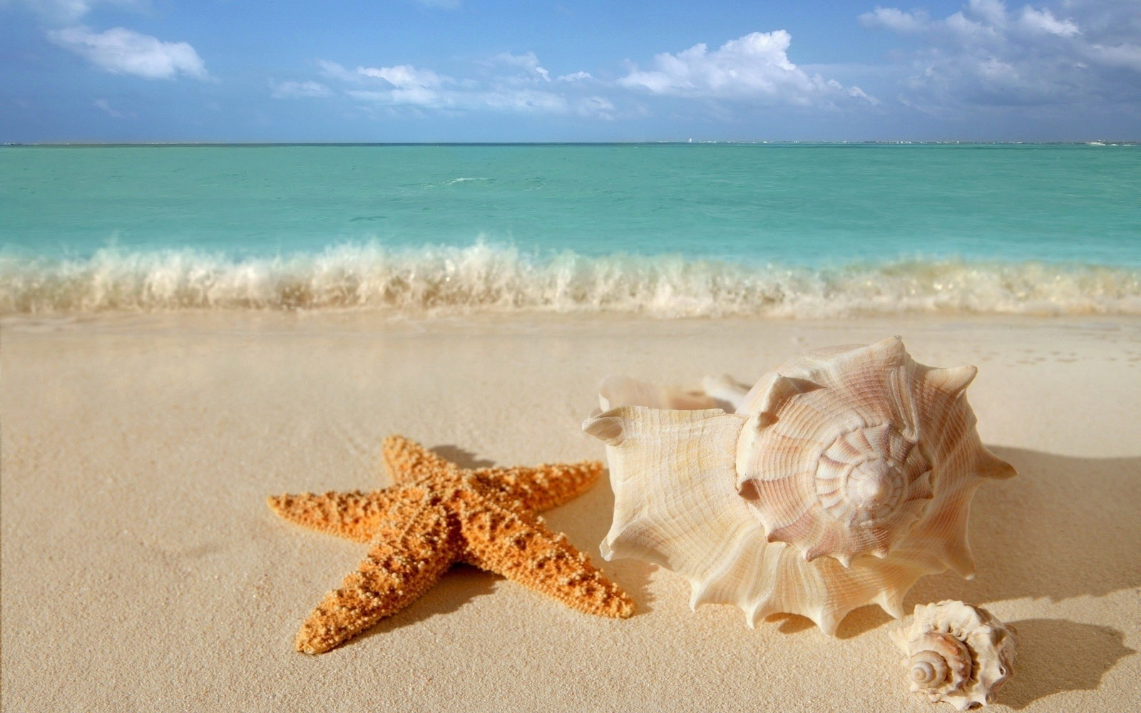 starfish seashells beach sand wallpaper view all view all ~ florida