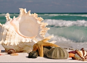 7 sea shells sea beach sand wallpaper