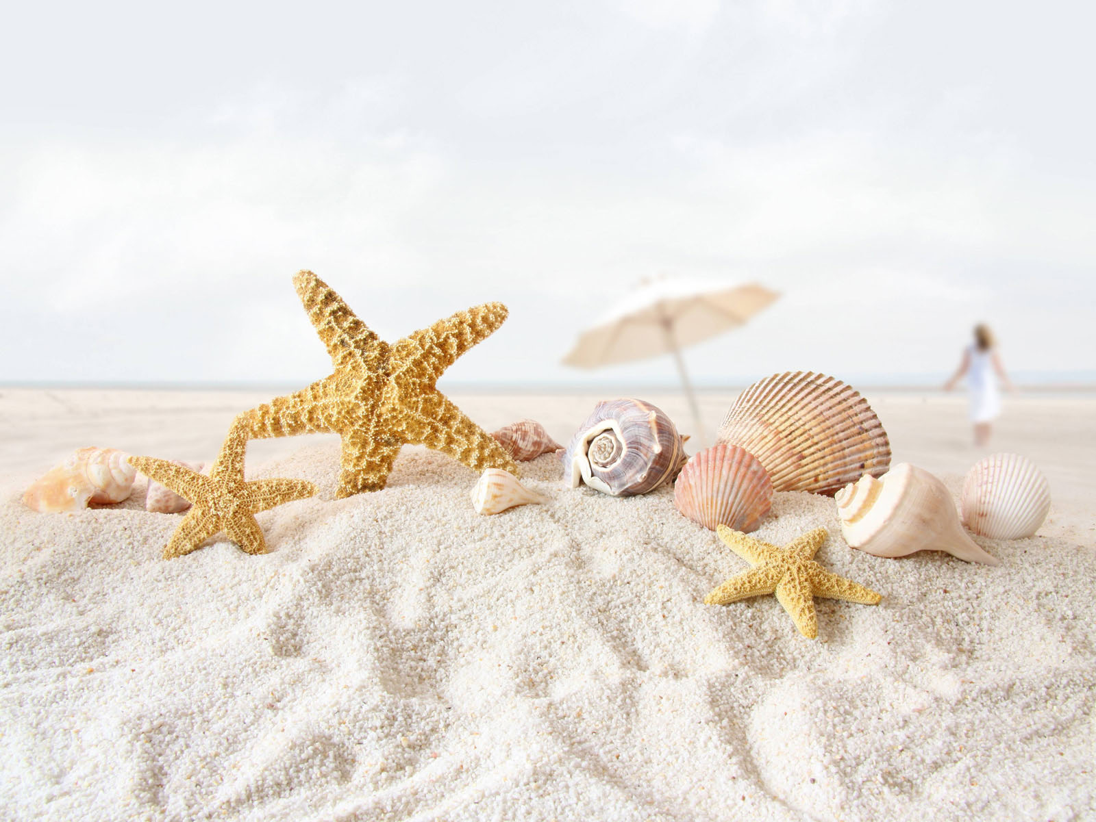 star fish sea shell beach wallpaper