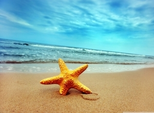 9 starfish sea beach sand wallpaper