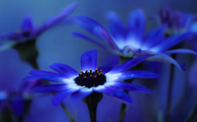 blue wallpaper by analearnin