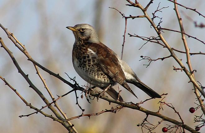 bird wallpaper spencer rushton