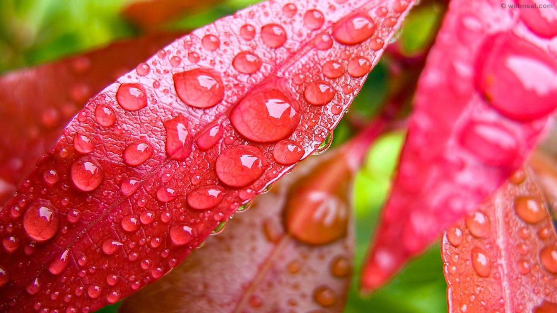 rain wallpaper drops