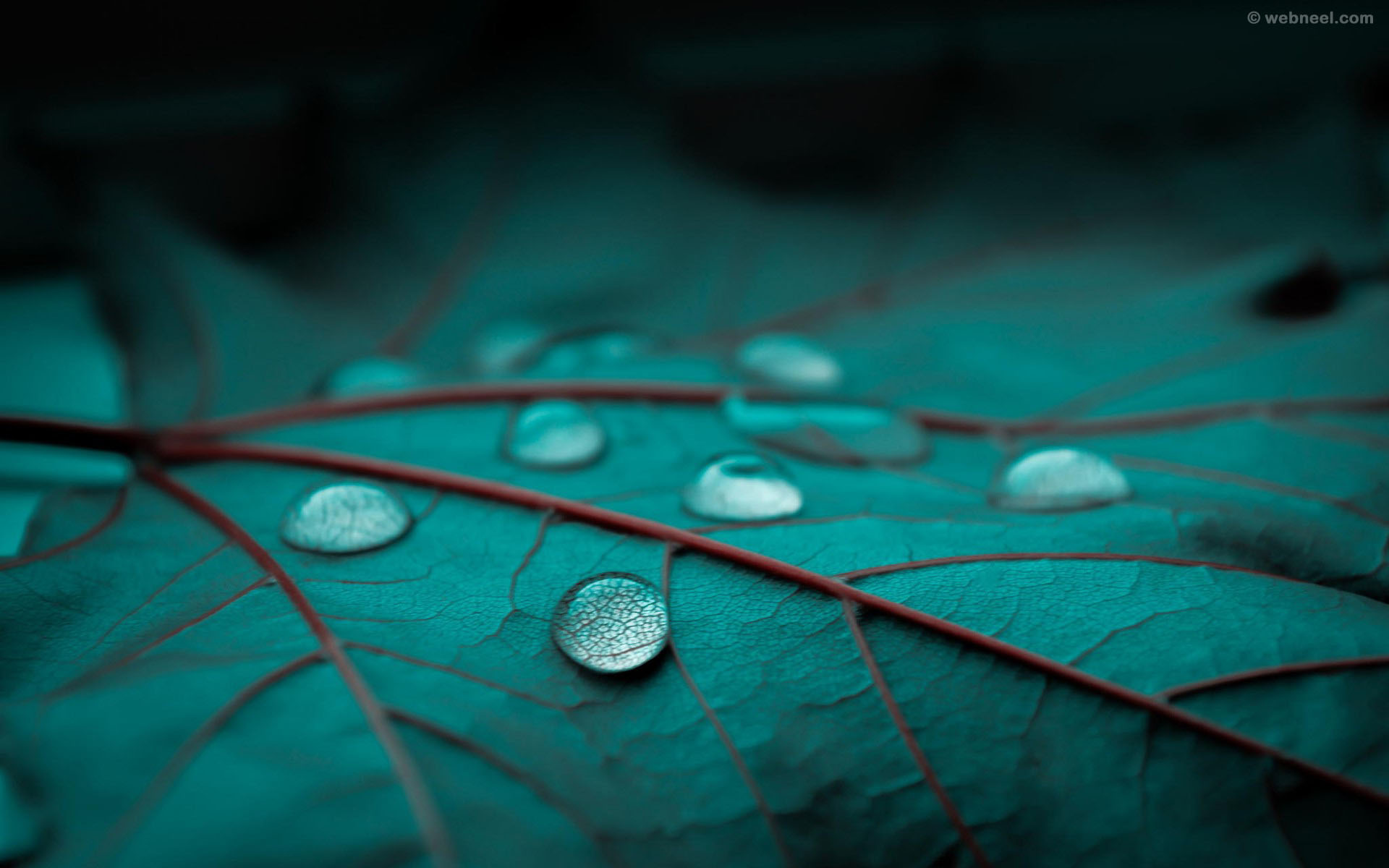 rain wallpaper drops