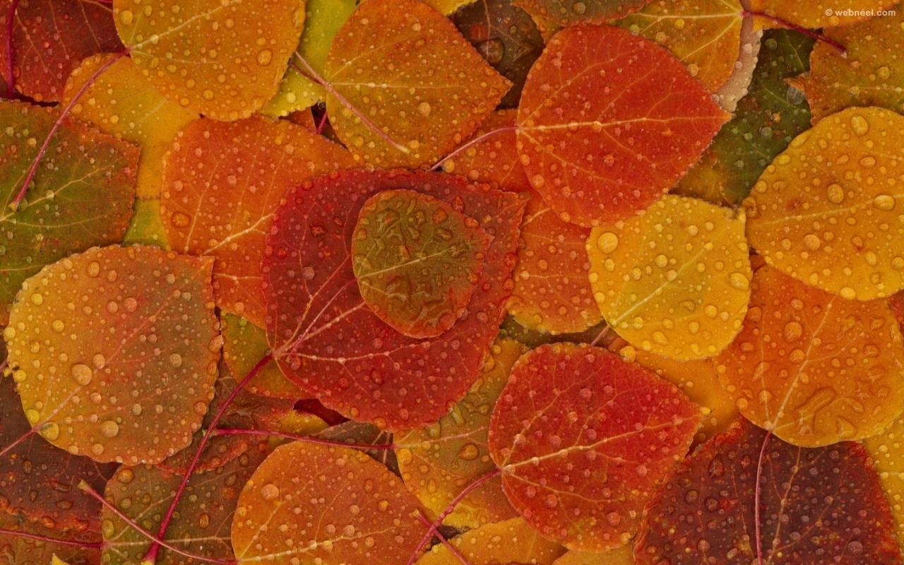 rain wallpaper leafs
