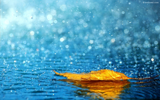 rain wallpaper leaf