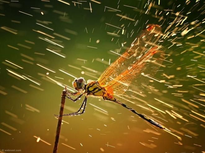 rain wallpaper dragonfly