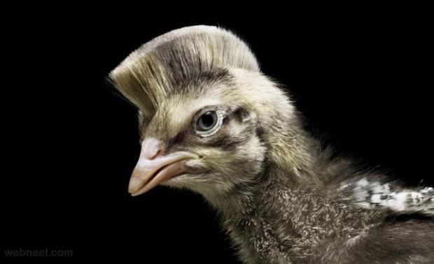 photo manipulation bird