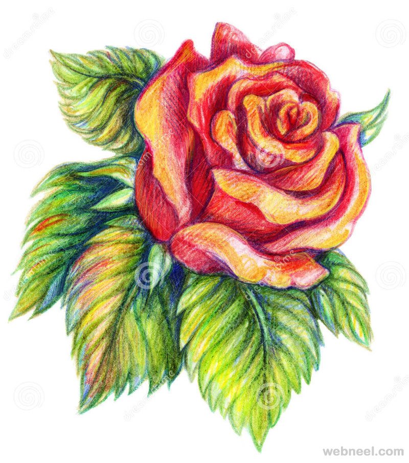 flower drawings rose