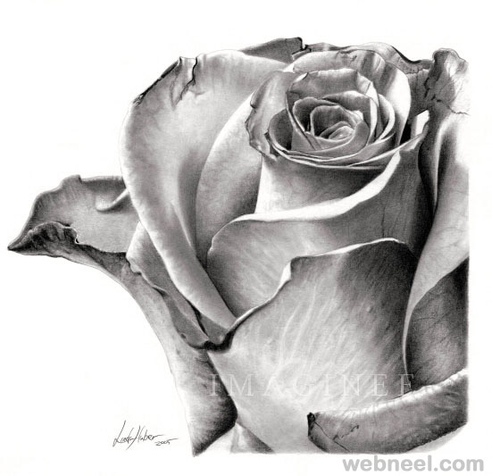 flower drawing rose