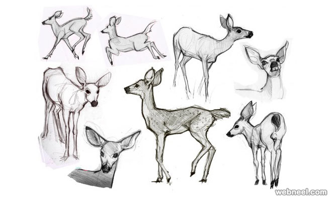 how to draw animals deer