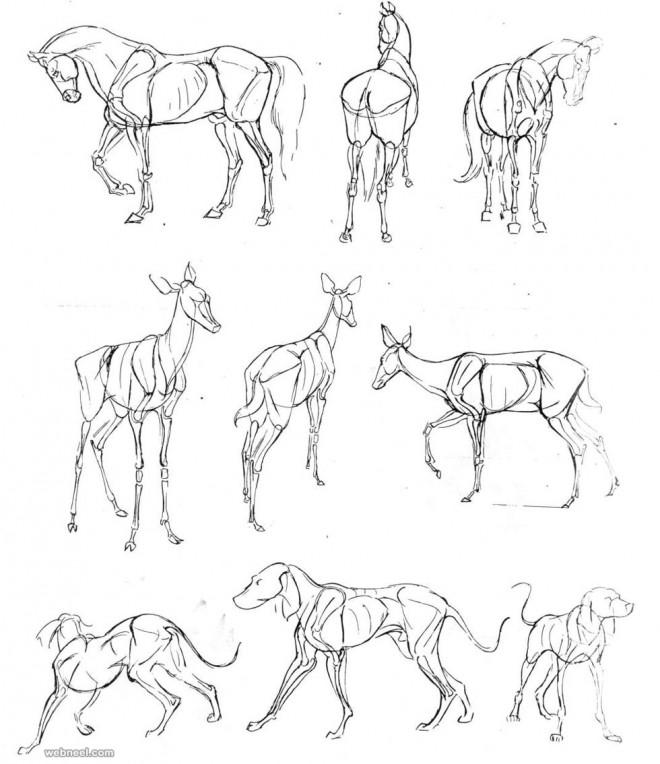 how to draw animals dog