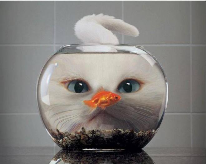 photography idea fish bowl