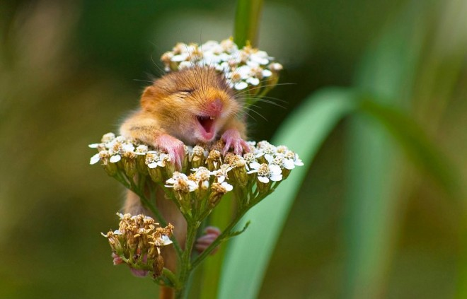 wildlife photography mouse by andrea