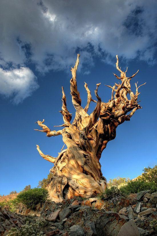 beautiful tree photos by rob kroenert