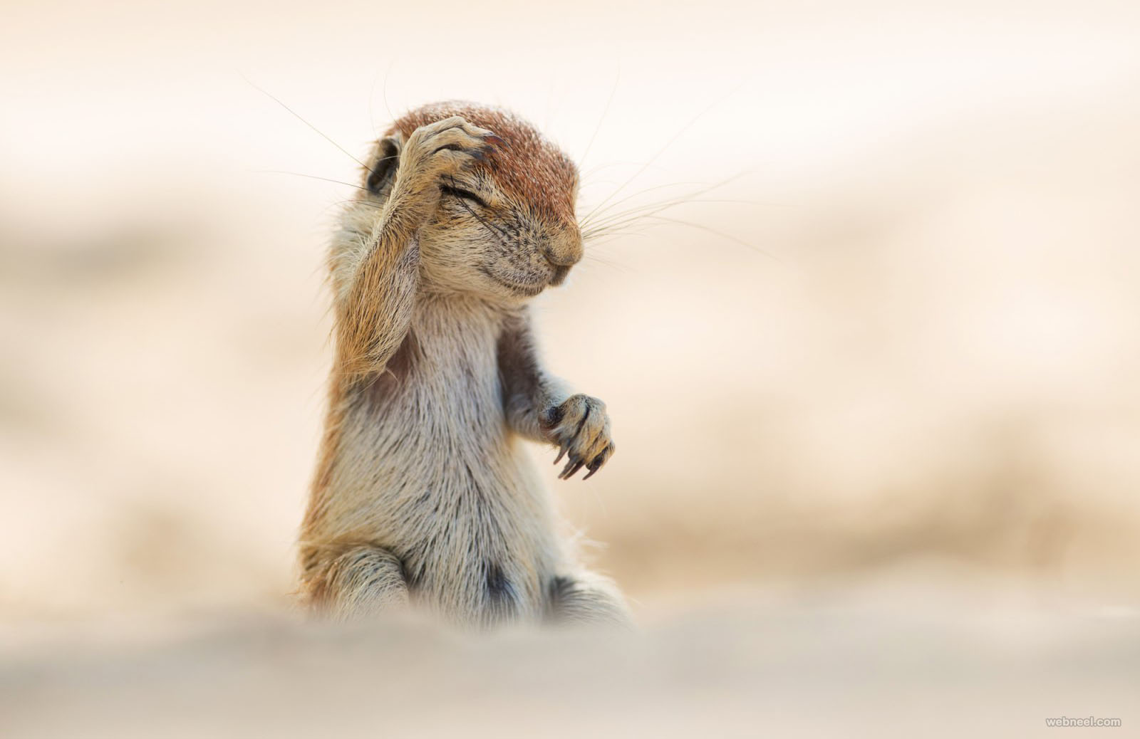 laughing squirrel comedy wildlife photography by yuzuru masuda