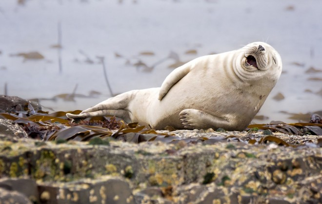 seal comedy wildlife photography by julie hunt