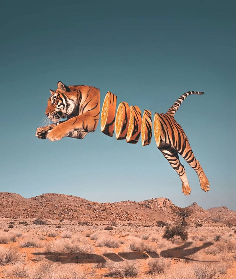 photo manipulation tiger