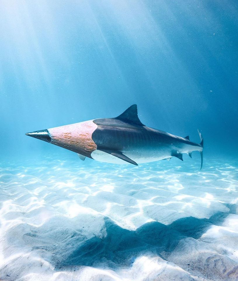photo manipulation pencil shark