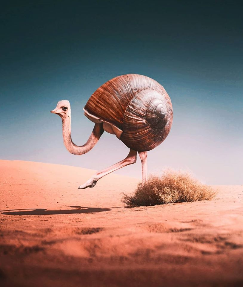 photo manipulation snail