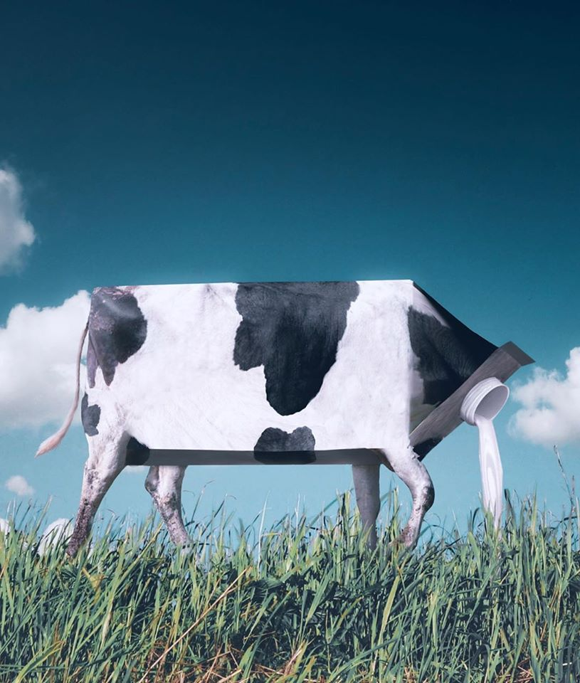 photo manipulation cow