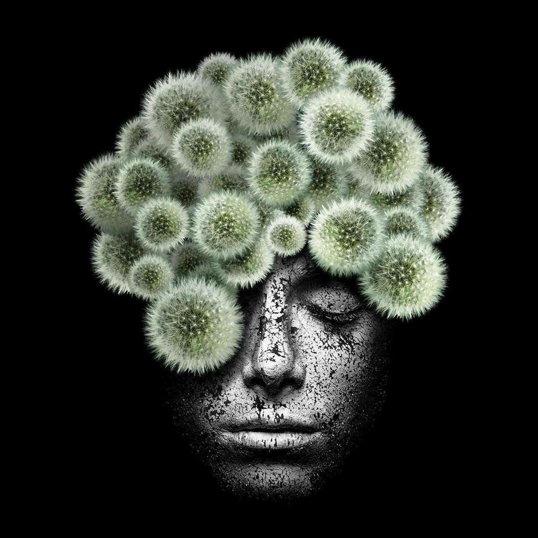 artwork dandelions