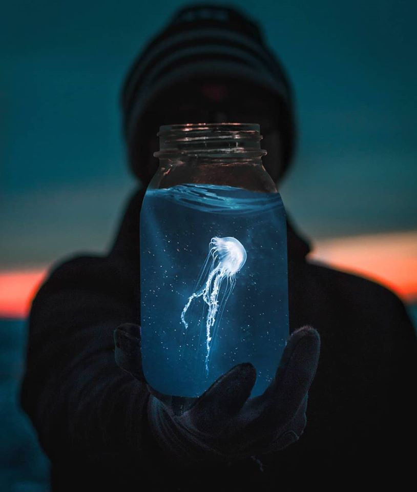 photo manipulation jellyfish