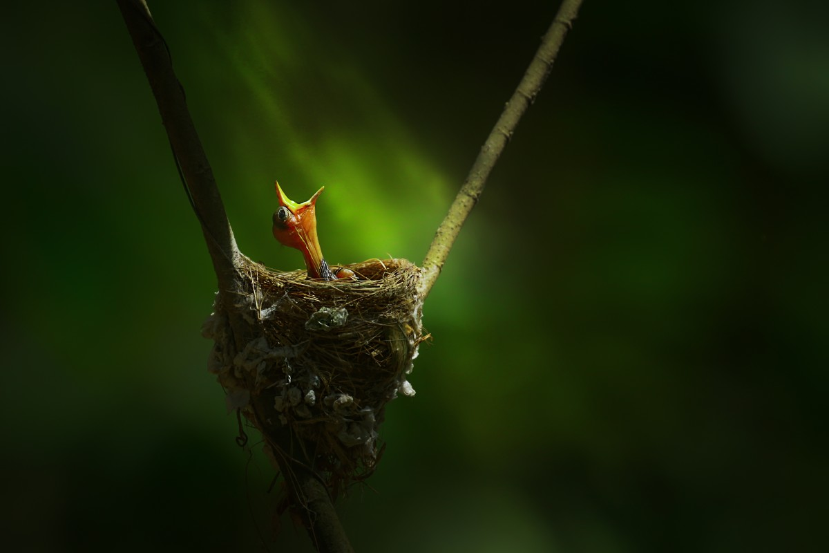 award winning bird photography first light by bogra