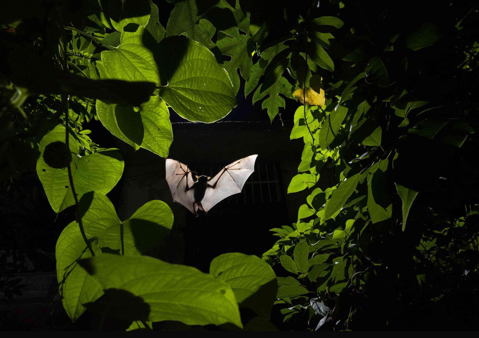 award winning a fruit bat framed by a ring of leaves