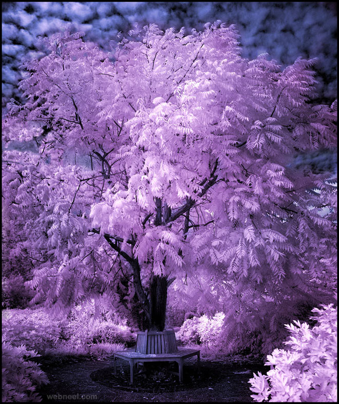 tree infrared photography michi lauke