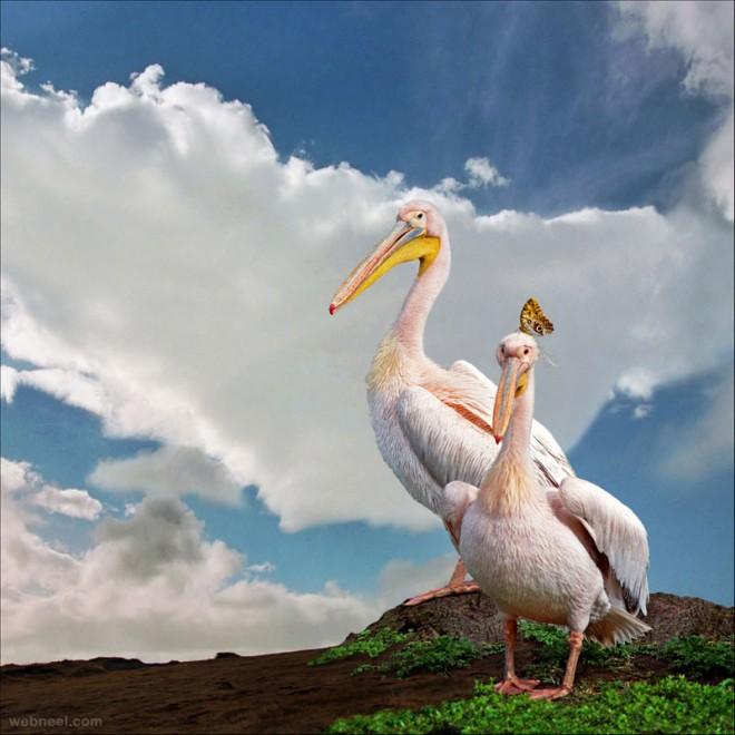best wildlife photography