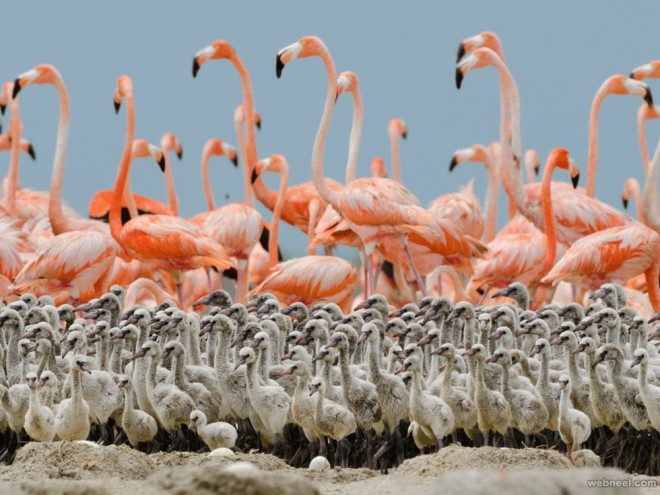 best wildlife photography flamingo