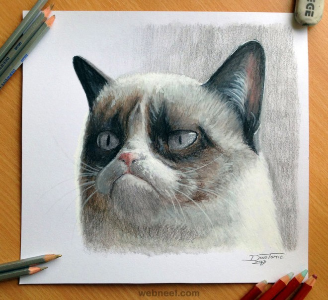 cat color pencil drawing atomiccircus