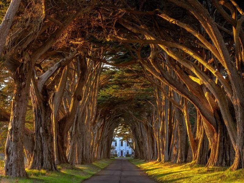 amazing trees on highway