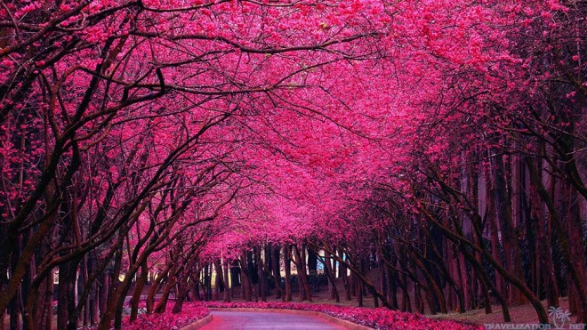 beautiful spring trees
