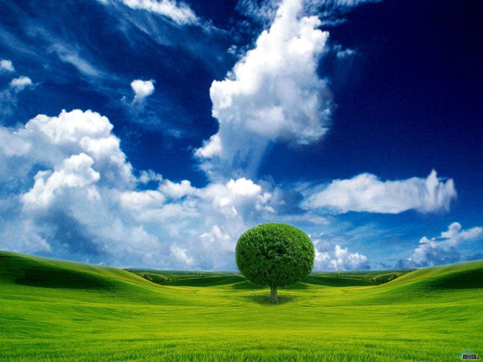 beautiful tree moynhsda