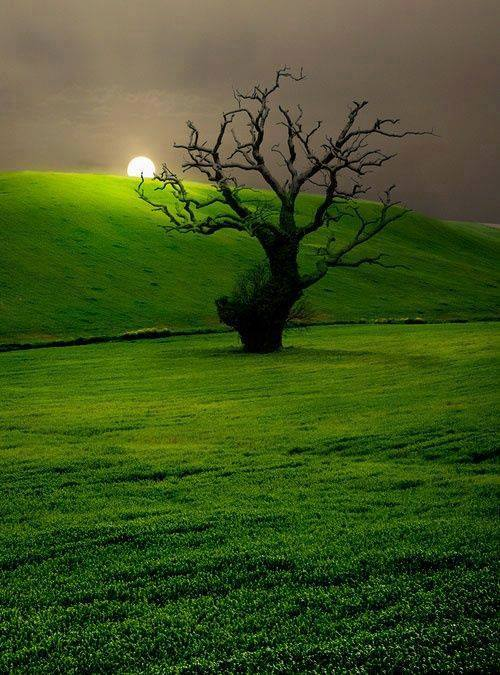 beautiful tree photo