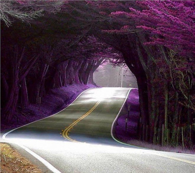 beautiful trees on highway