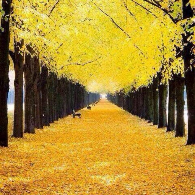 beautiful trees yellow park