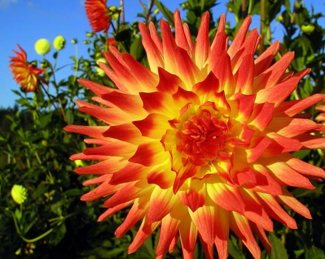 flower photo by steve skupa