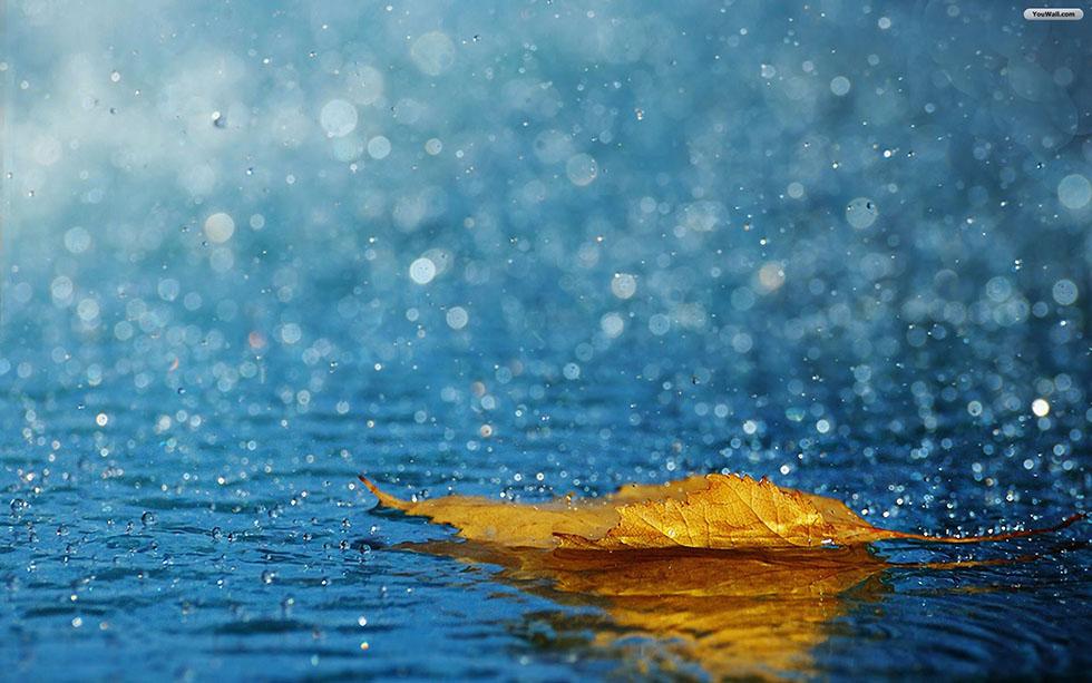leaf rain photography