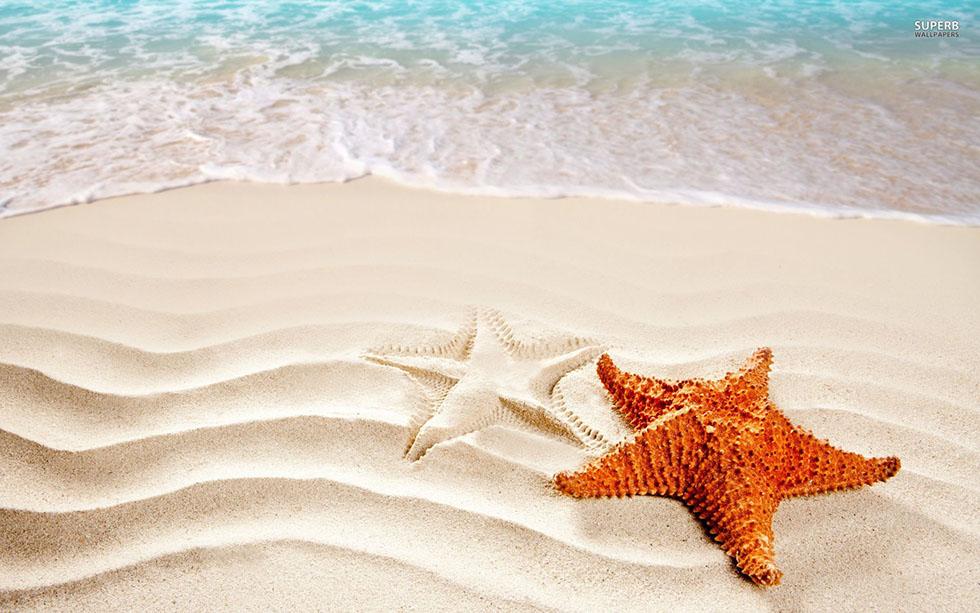 starfish beautiful beach
