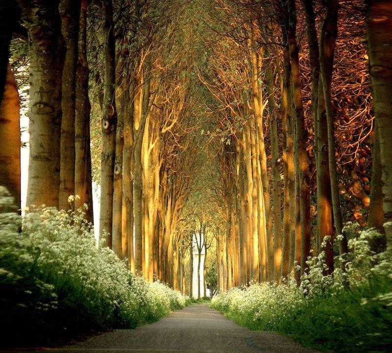 trees on highway