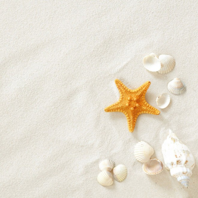 white sand beach starfish
