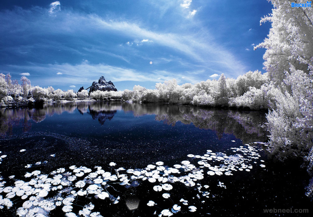 infrared photography tom bricker