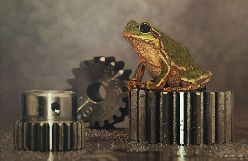 frog hyper realistic painting by youngsungkim