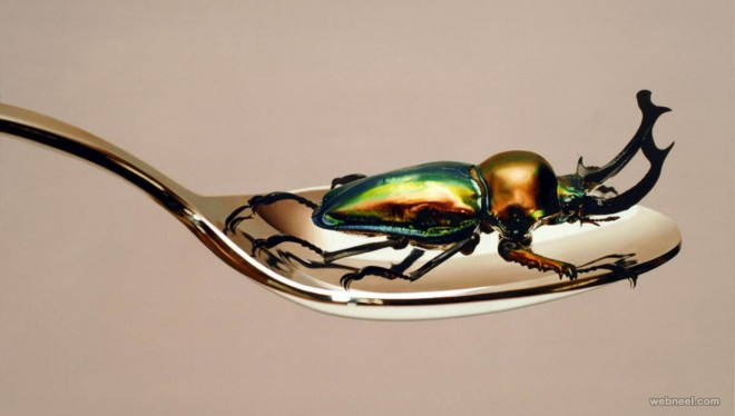 beetle hyper realistic painting by youngsungkim