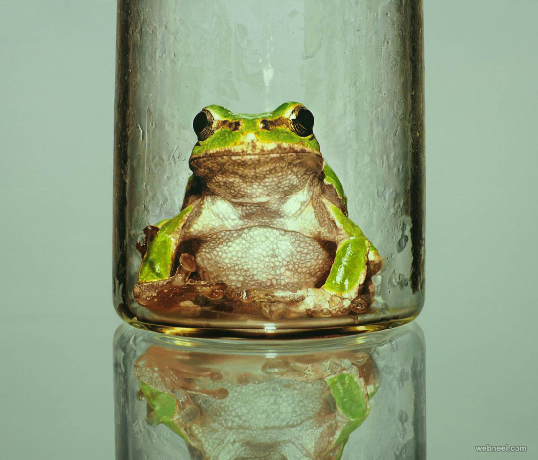 frog reflection hyper realistic painting
