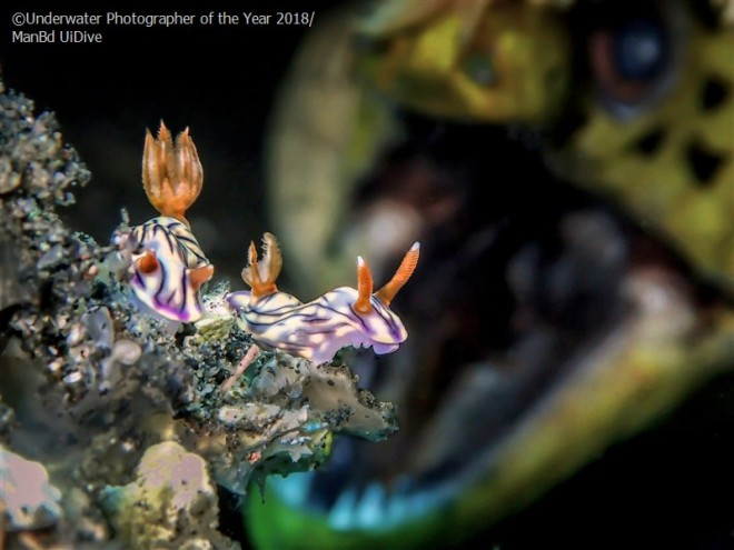 roar underwater photography